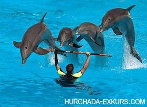 delfin-show_2