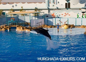 delfin-show_3