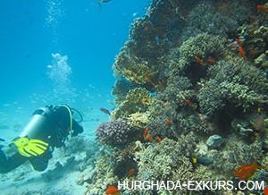 diving-kurs_3