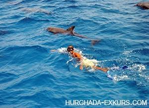dom-dolphin_2