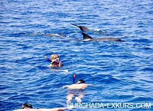 dom-dolphin_3
