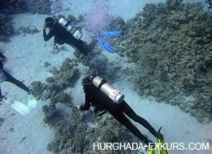 diving-ind_2