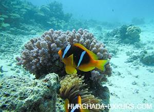 diving-ind_4