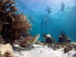 Бухта черепах - Абу Даббаб